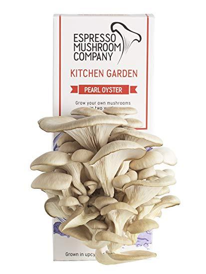 Pearl Oyster Mushroom Kit